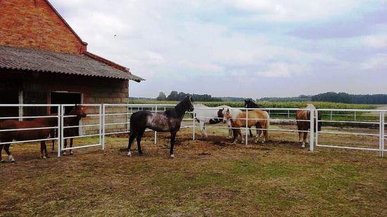 - ranczo_4.jpg